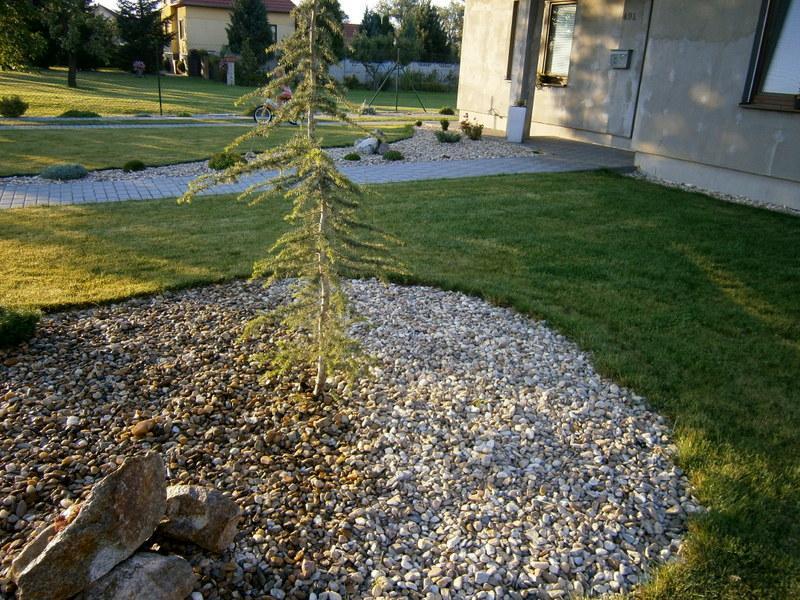 Zahrada a předzahrádka - můj krásný cedr