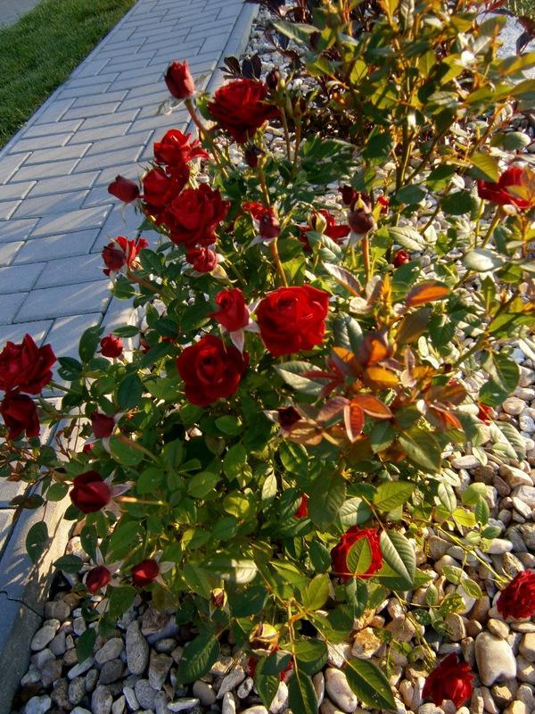 Zahrada a předzahrádka - Obrázek č. 45
