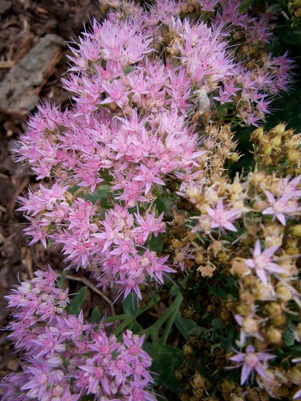 Zahrada a předzahrádka - včelky se ještě snaži,1.podzimní den