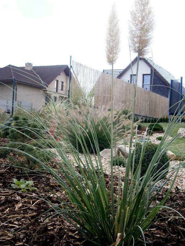 Zahrada a předzahrádka - Obrázek č. 65