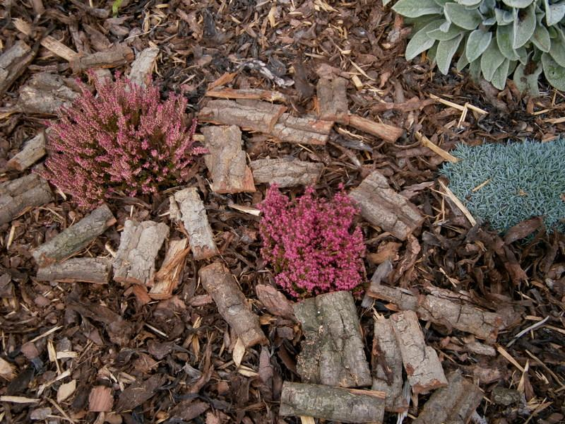 Zahrada a předzahrádka - vřesy