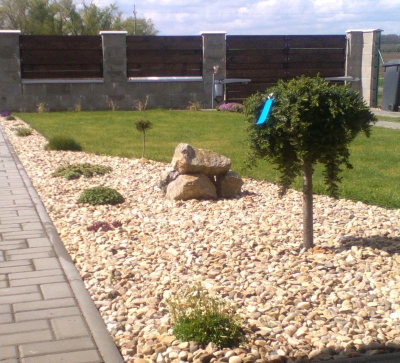Zahrada a předzahrádka - Udělala jsem si radost a koupila 4 nové stromečky :-D- jeden do ulice
