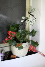jediná kytička, která v chalupě přežila zimu i když se topilo tak 1x za týden