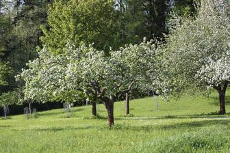 stromy roky nikdo neudrřoval, byly přestárlé