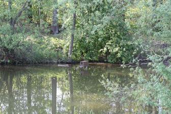 kousek rybníka s kachním domečekem