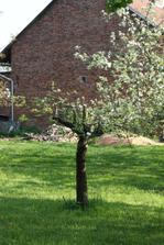 některé stromy ale místní neúrodnou zem snášejí už desítky let