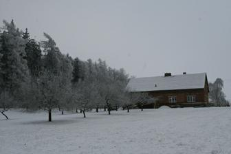 stromy v zimě - před radikálním řezem