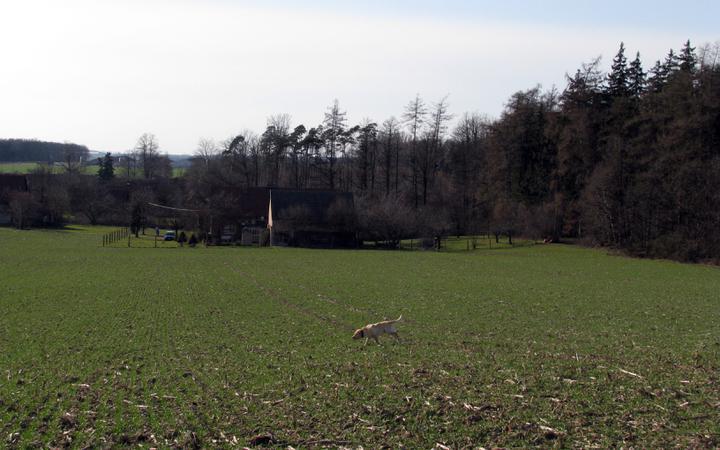 Cesta z města - venkovská zahrada - chalupa v předjaří