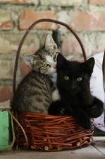 pokus o ručně pletený košík využívají kočky