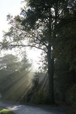 sluníčko se prodírá mlhou