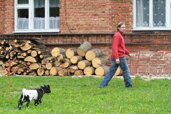 nadělali jsme dřevo na zimu