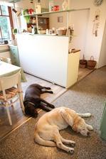 hlavní je si kuchyň pořádně pohlídat :-)