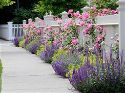 Nápady na zahradu - moc se mi líbí i kombinace levandule a růží