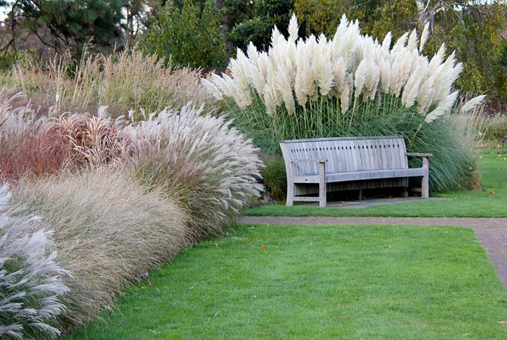 Nápady na zahradu - pampová tráva