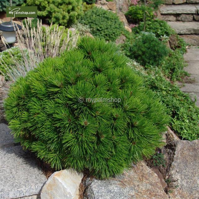 Nápady na zahradu - Obrázek č. 60