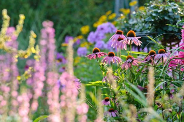 Nápady na zahradu - Obrázek č. 82
