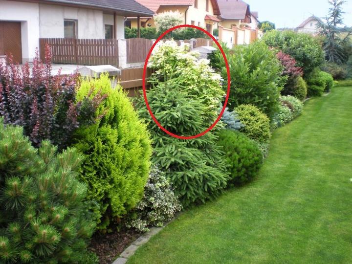 Nápady na zahradu - Obrázek č. 98