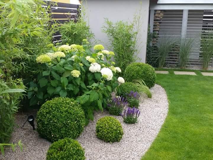 Nápady na zahradu - Kombinace hortnzie Hydrangea arb. Annabelle, tráva Stipa, šalvěj a buxusy