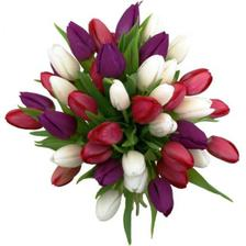 aj tulipanu su krasne..