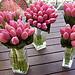 Inspiracie - ma niektora skusenosti s tulipanmi?