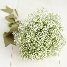 Kvety - Obrázok č. 50