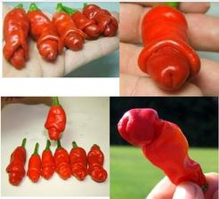 Dorazily  mi semínka papriček .Jsem zvědavá,jakou budou mít chuť.