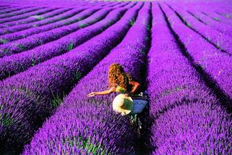 krome jineho taky miluju levanduli... no a vzhledem k tomu, ze jsem byla pozadana o ruku ve Francii, dalo by se uvazovat i o fialove svatbe s vuni levandule...