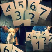 Cedulky s čísly stolů a můj nejvěrnější pomocník.. <3