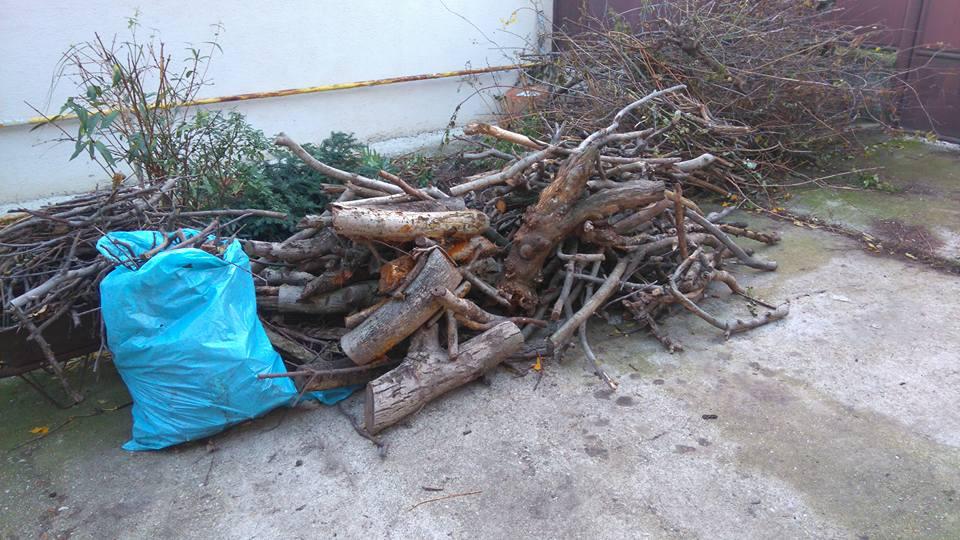 Darujem drevo za odvoz - Obrázok č. 1