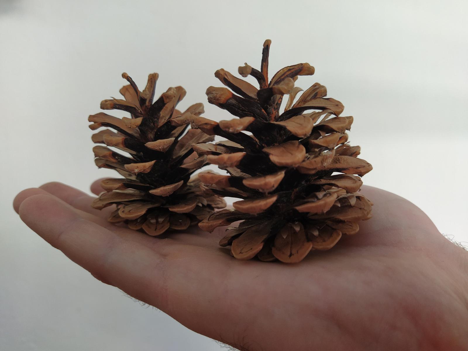 Přírodniny - borovicové šišky - Obrázek č. 1