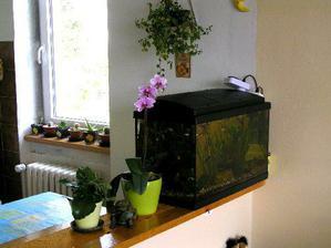 naše akvárium a pohled z obýváku do kuchyně