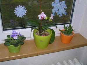 v kuchyni na okně - nová fialka a konečně vykvetla orchidej