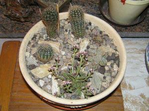 květináč s kaktusy a sukulenty