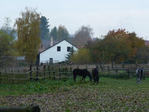 před koupí - pohled na zahradu a dům zpoza pole