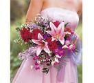Představy - lilie jsou nádherné, favoritka č.2