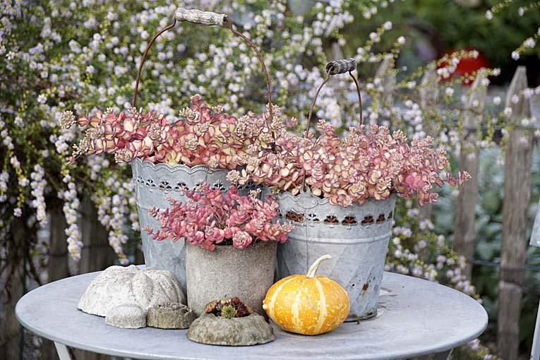 Podzimní inspirace - Obrázek č. 38