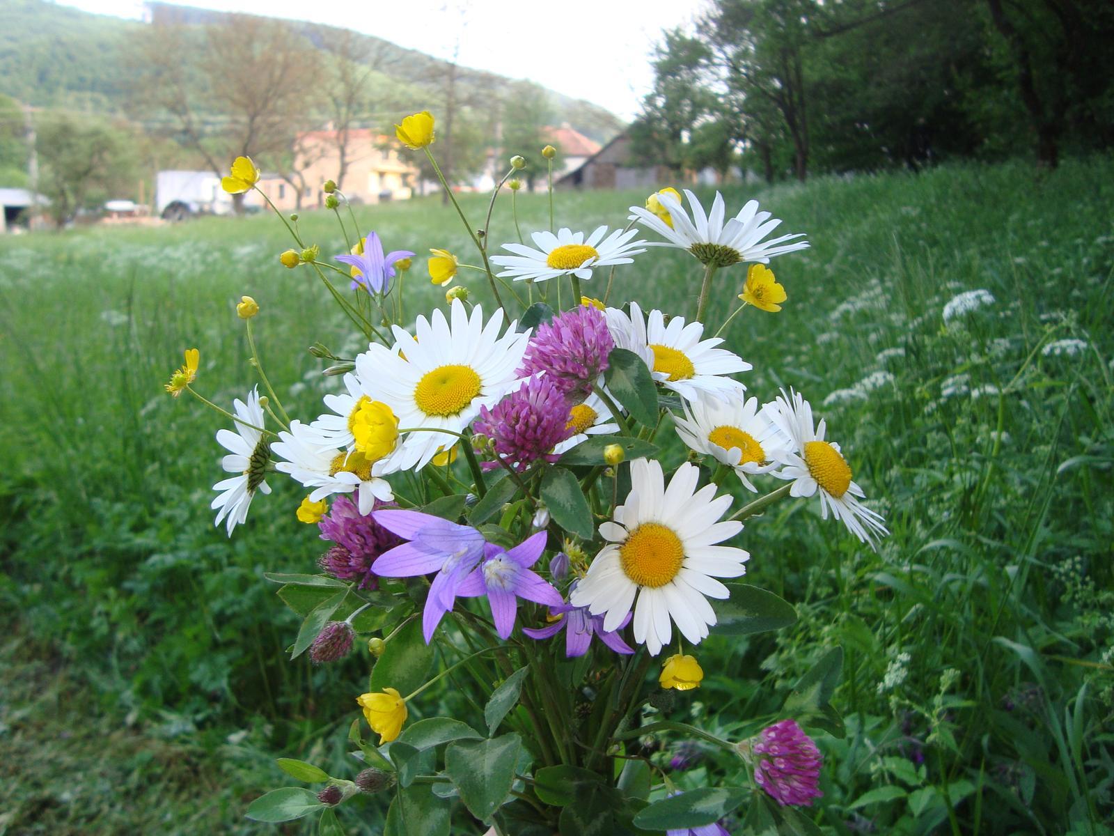 Naša chalupa - kytička z našej záhradky ♥