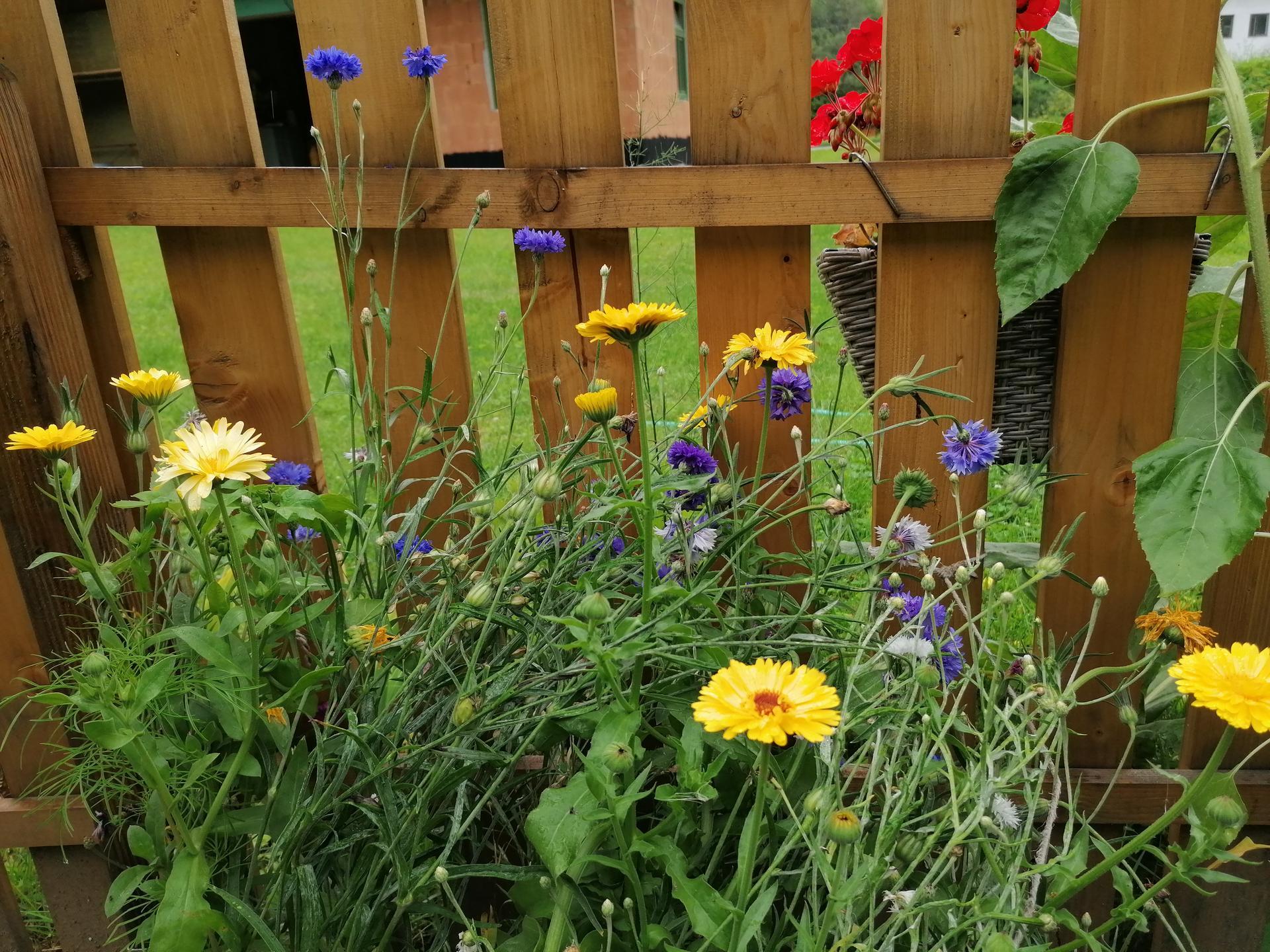 záhrada - Obrázok č. 175