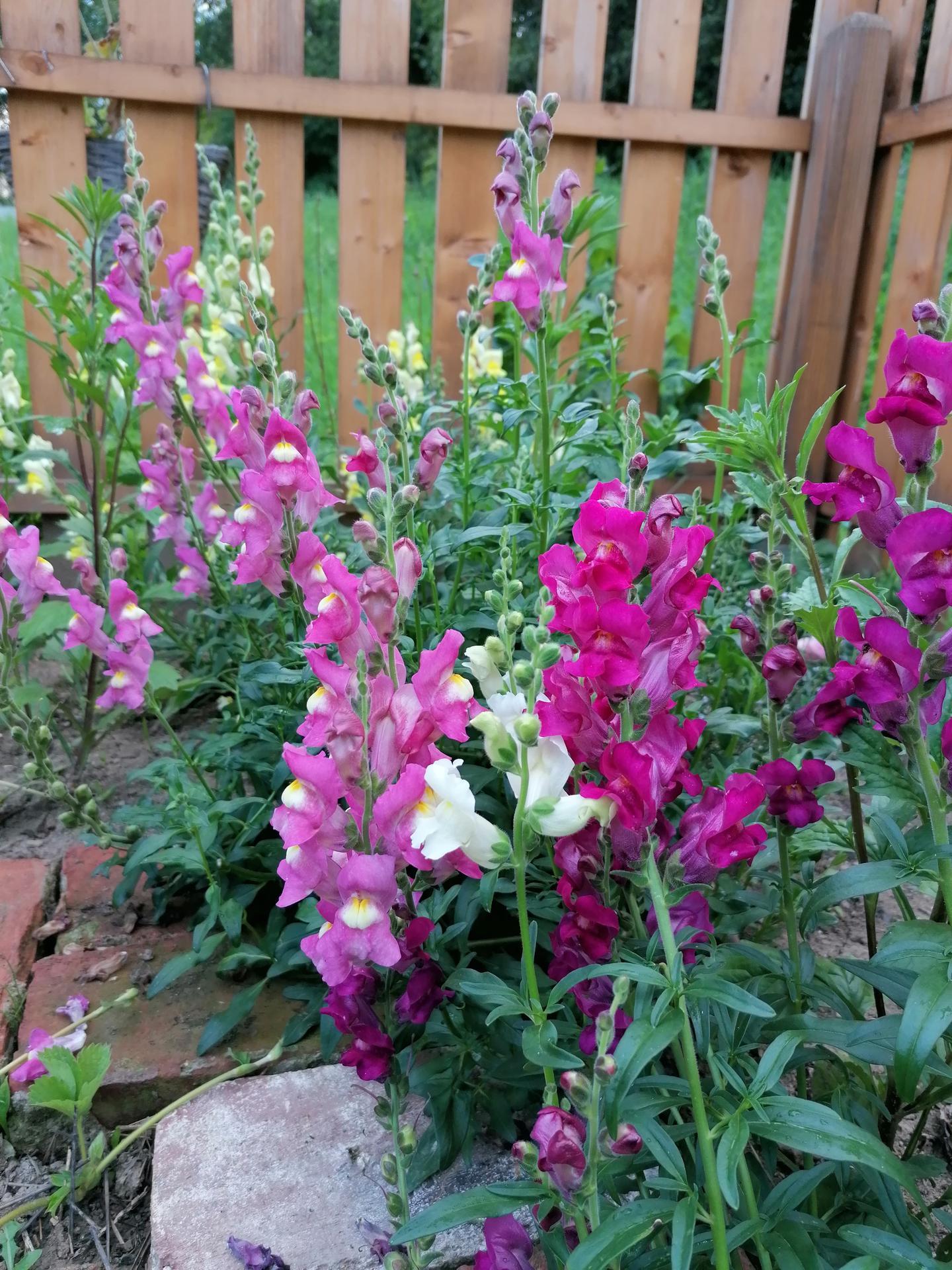 záhrada - a moje papuľky ♥
