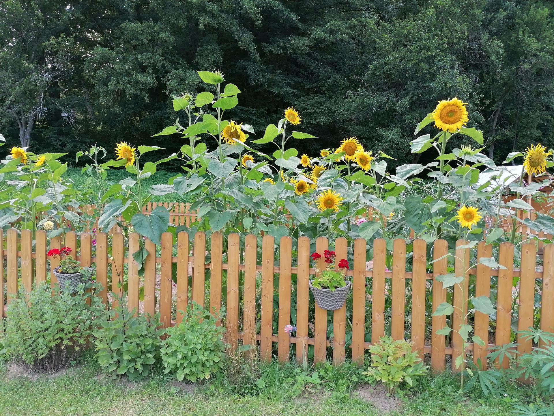 záhrada - Obrázok č. 191