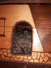 ☆☆☆☆☆ ultra all inclusive / hotel pre vtáčiky