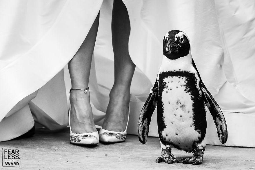 Najlepšie svadobné fotografie za rok 2018 - Obrázok č. 79