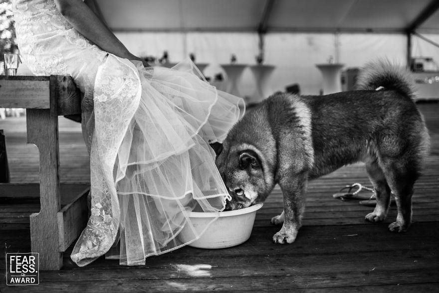 Najlepšie svadobné fotografie za rok 2018 - Obrázok č. 85