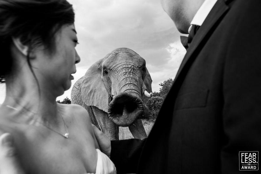 Najlepšie svadobné fotografie za rok 2018 - Obrázok č. 86