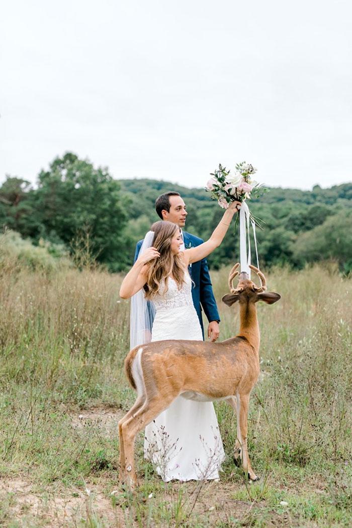 Odvážny jeleň sa zapojil do svadobného fotenia - Obrázok č. 2