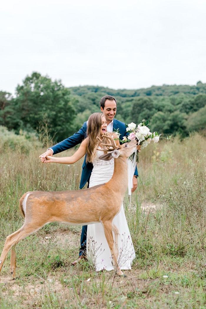 Odvážny jeleň sa zapojil do svadobného fotenia - Obrázok č. 3