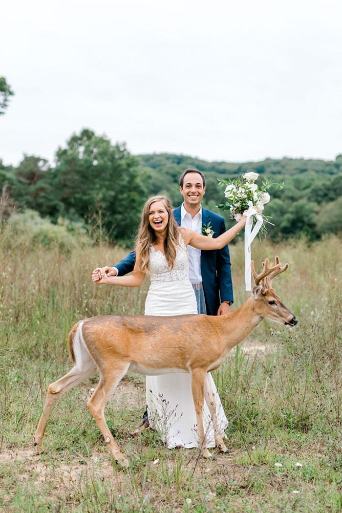 Odvážny jeleň sa zapojil do svadobného fotenia - Obrázok č. 4