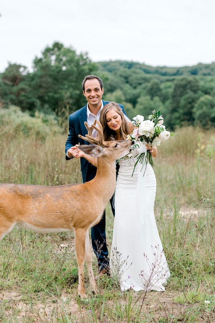 Odvážny jeleň sa zapojil do svadobného fotenia - Obrázok č. 5