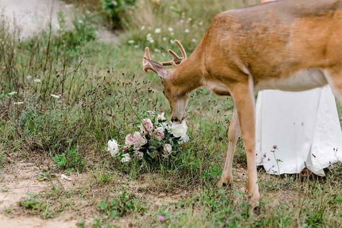 Odvážny jeleň sa zapojil do svadobného fotenia - Obrázok č. 6