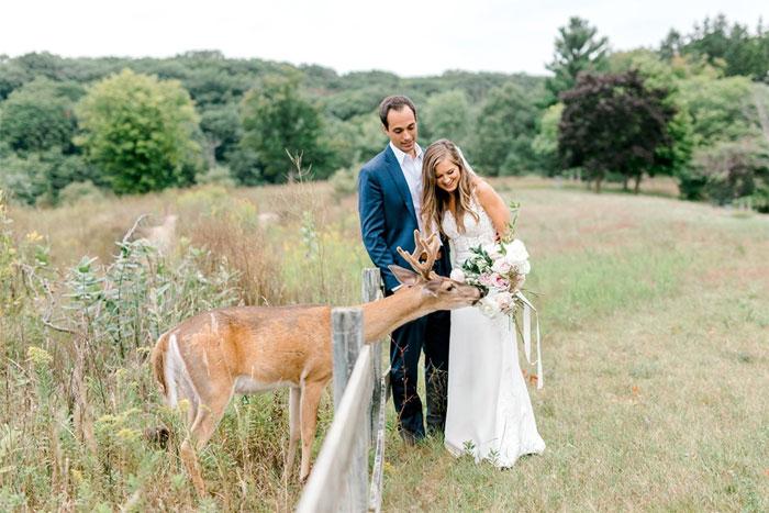 Odvážny jeleň sa zapojil do svadobného fotenia - Obrázok č. 7